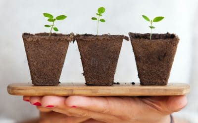 Are You a Plant to Be Rooted Up?