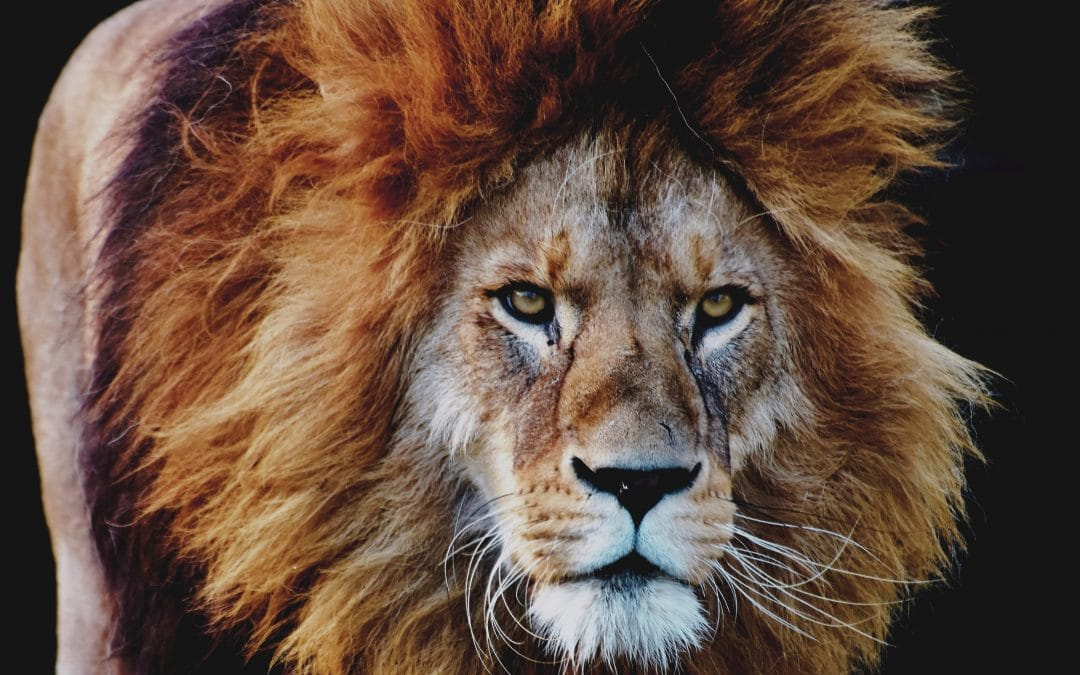 """""""The Lord Will Roar From Zion"""""""