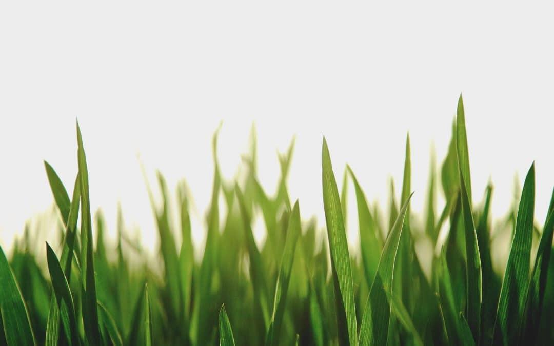 """""""All Flesh is Grass"""""""