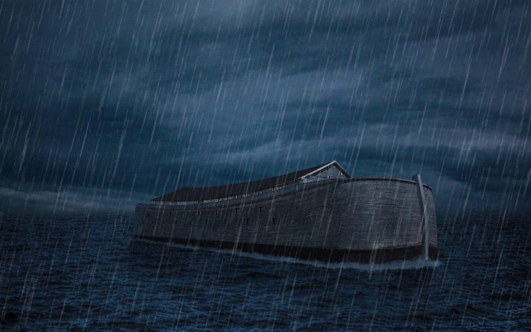 Cedar Paneling in the Ark