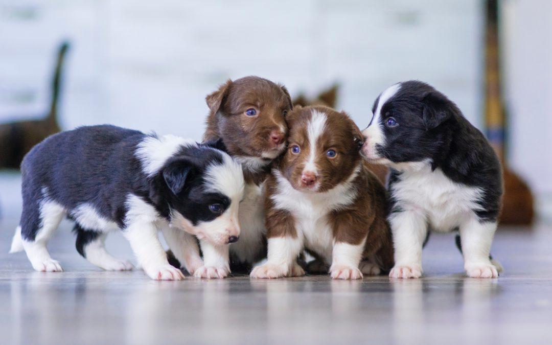 Watchdogs or Hushpuppies?